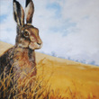 Hare in Stubble